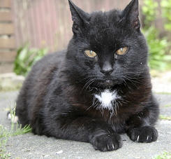 #160 Cat Miepy - Handsome old lady
