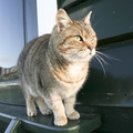 20110116-36 The millers cat called Poes.jpg