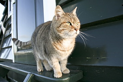 #166 The millers cat called Poes