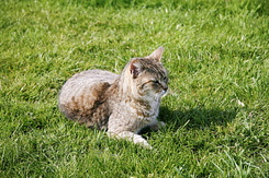 #168 Poes outside on the grass