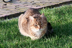 #169 The millers cat called Poes