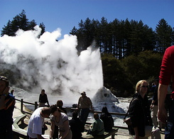 #417 Lady Knox Geyser - Wai-O-Tapu Thermal Wonderland (New Zealand)