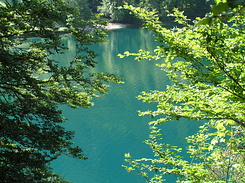 #2204 Alpsee Lake - Hohenschwangau (Germany)