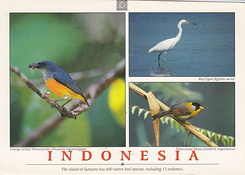 #5721 Postcard ID-304048 received from Indonesia