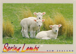 #6043 Postcard NZ-209710 received from New Zealand